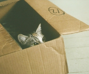 cat, box, and vintage image
