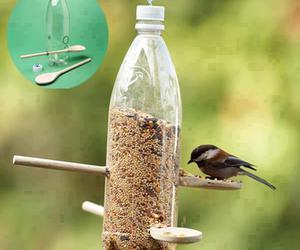 bird, diy, and food image