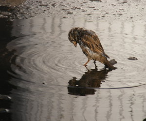 bird, lonely, and water image