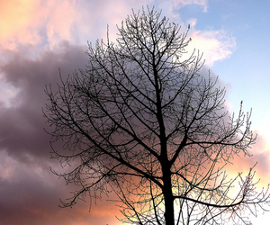 sky and tree image