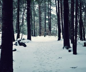 narnia, nature, and snow image