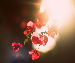 flowers, red, and light image