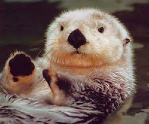 otters image