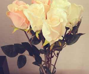 beautiful, roses, and white image