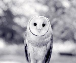 animal, barn owl, and owl image