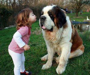 dog, baby, and kiss image
