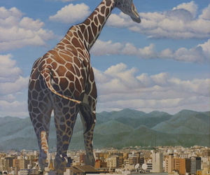 animal, city, and giraffe image