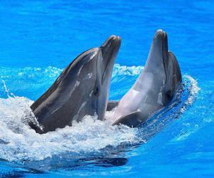 dophins image