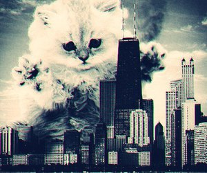 cat, city, and black and white image