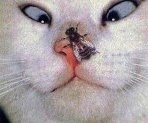 adorable, cat, and lol image