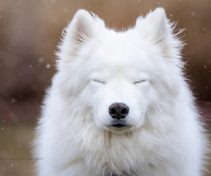 white, dog, and snow image
