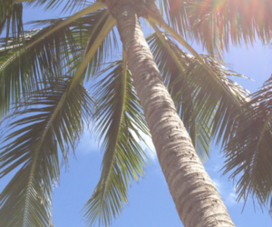 palm, summer, and sun image