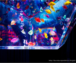 beautiful, colorful, and fish image