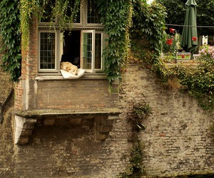 dog and house image