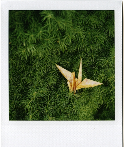 green and origami image