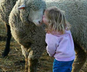 sheep, child, and animal image