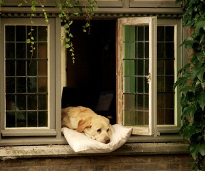 dog, window, and animal image