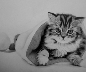 art, cats, and cute animals image