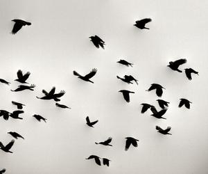 تفسير الطير في المنام رؤية الطيور في الحلم لابن سيرين