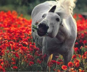 horse, flowers, and red image