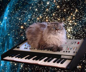 cat, space, and keyboard image