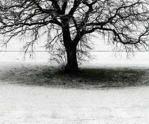 black and white, tree, and single image