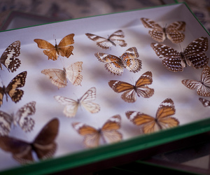 butterfly, collection, and insects image