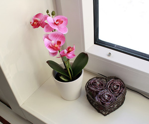 flower, nice, and roses image