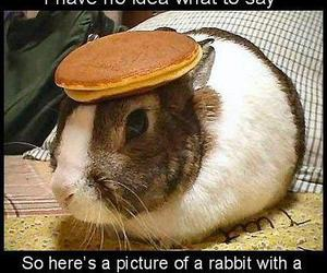 pancakes, rabbit, and bunny image
