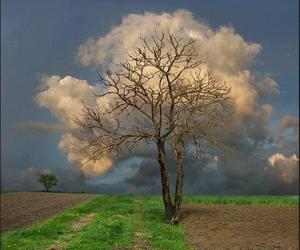 clouds and tree image