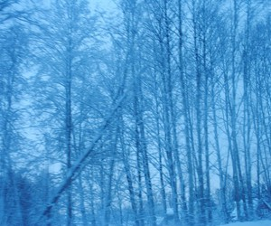blue, forest, and nature image