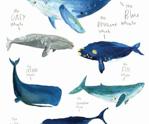 whale, art, and blue image