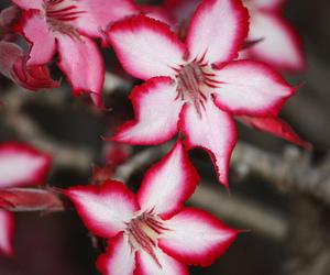 beautiful, flowers, and impala image