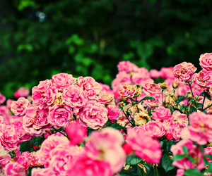 flowers, gorgeous, and nature image