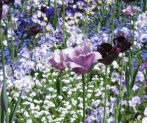 flowers, pink, and meadow image