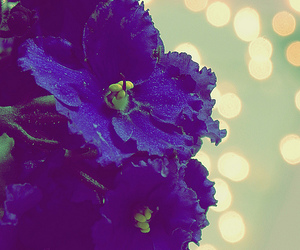flower, purple, and cute image