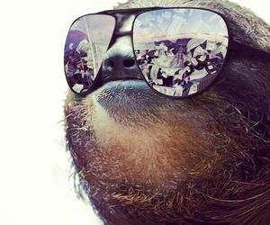 sloth, funny, and money image