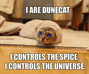 cat, lolcat, and dune image