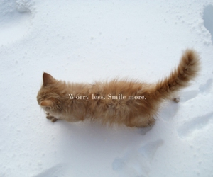 cat, smile, and snow image
