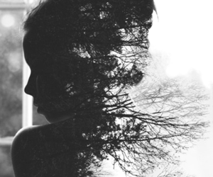 black and white, tree, and nature image