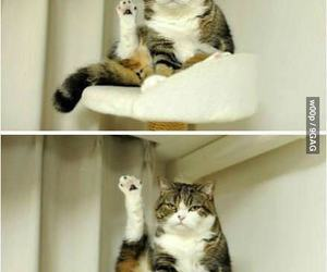 funny, funny cat, and leg image