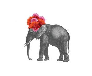 flowers, elephant, and animal image