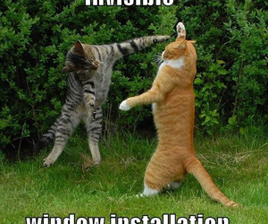 cat, funny, and invisible image