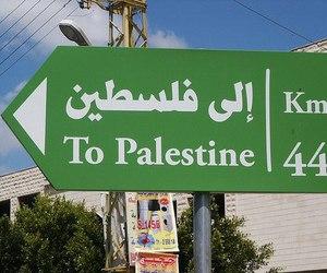 free palestine, palestine, and Gaza image