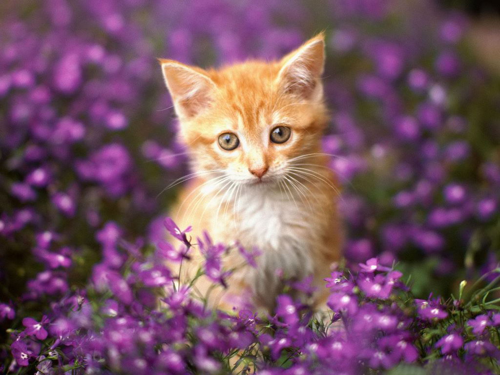 Puppies Kittens Beautiful Cat And Piano Purple Flowers Mother Baby
