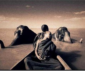 elephant, Gregory Colbert, and Ashes and Snow image