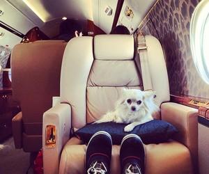 dog, jet, and luxury image