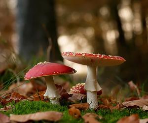 mushroom, nature, and autumn image