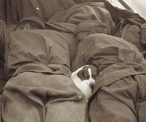 dog, war, and soldier image