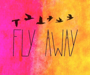 bird, fly, and away image